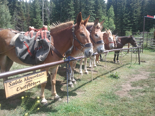 The best mules & horses around!